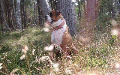 Jak adoptowany pies stał się przewodnikiem duchowym